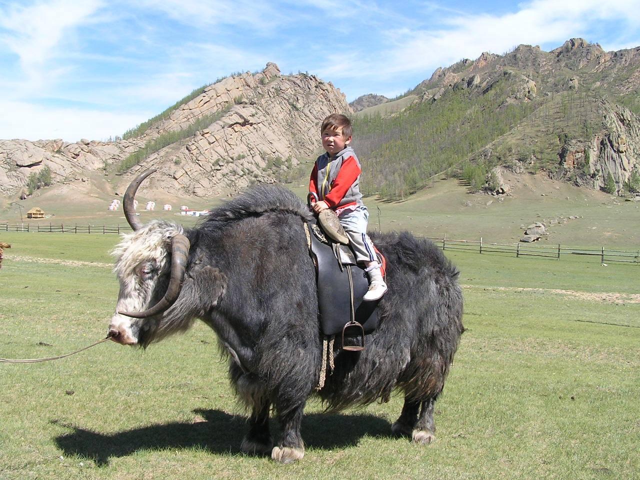 Mongolija 42494983_1890019344452434_8954162103762026496_n