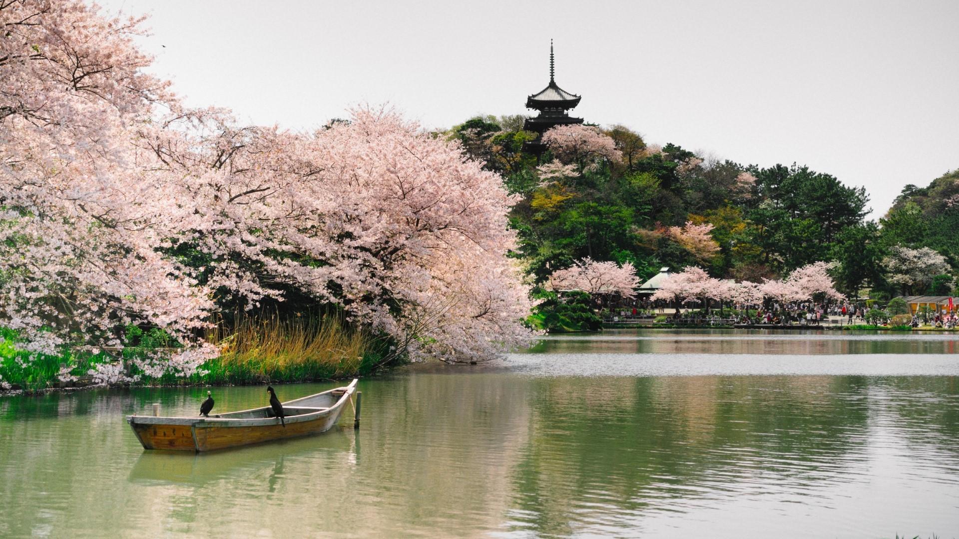 besplatno japansko mjesto za upoznavanje araps2arabs šibanje